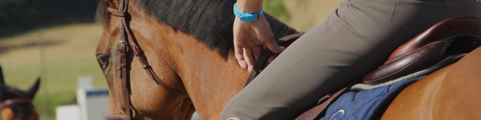 Apprentissage chez le cheval