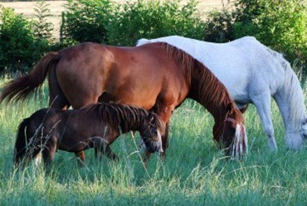 ameliorer-le-bien-etre-des-chevaux-600x403 Améliorer le bien-être des chevaux