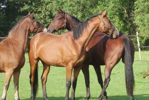 detention-des-chevaux-en-groupe-600x403 Détention des chevaux en groupe