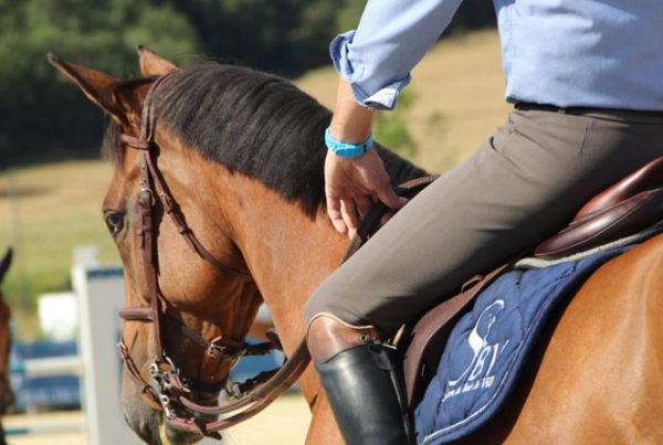 apprentissage-cheval-ecurie-active-600x403 Apprentissage chez le cheval