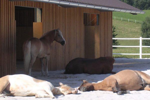 amenager-chevaux-en-groupe-600x403 10 critères pour bien aménager un hébergement de chevaux en groupe