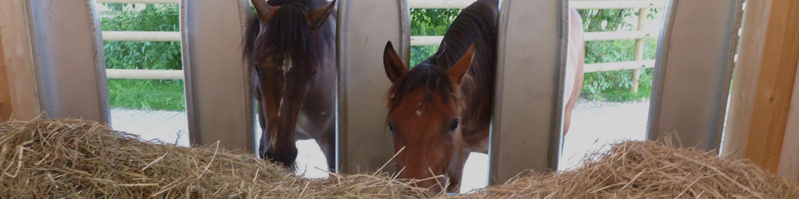 Une écurie active pour 2 chevaux est-ce possible ?