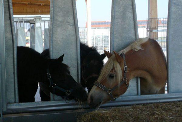 chevaux-social-600x403 L'écurie active est-elle adaptée à mon activité?