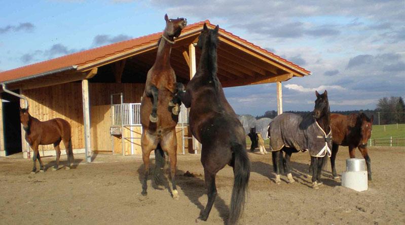 chevaux-social L'écurie active est-elle adaptée à mon activité?