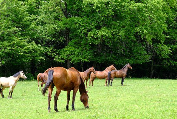 Ecurie-Active-Lo-Vardiafs-1-600x403 construire le bien–être du cheval et du cavalier