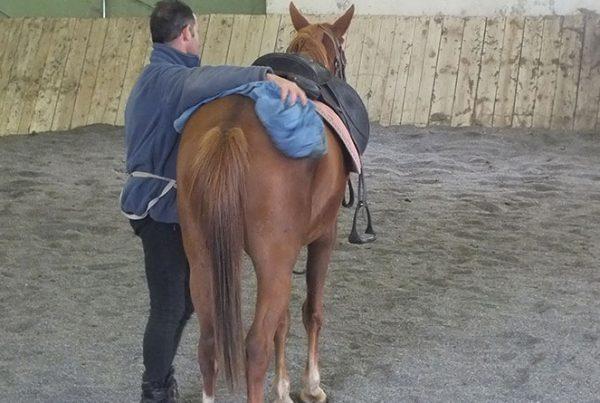 cheval-bienveillance-600x403 L'Écurie Active est bienveillance