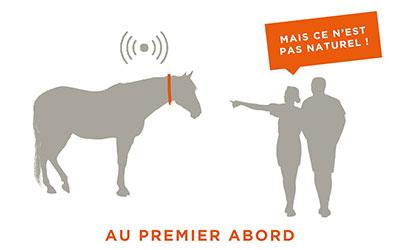AU-premier-abord Comment les écuries actives révèlent-elles les paradoxes de l'équitation ?