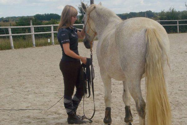 Ecurie-active-ariane-600x403 Comment les écuries actives modifient-elles les rapports entre l'Homme et le cheval ?