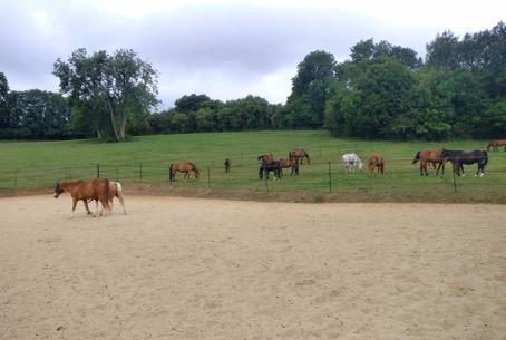 etude-ecurie-active Comment les écuries actives modifient-elles les rapports entre l'Homme et le cheval ?