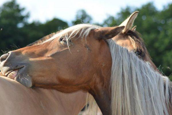 ariane-lefebvre-Ecurie-active-600x403 Comment les écuries actives révèlent-elles les paradoxes de l'équitation ?