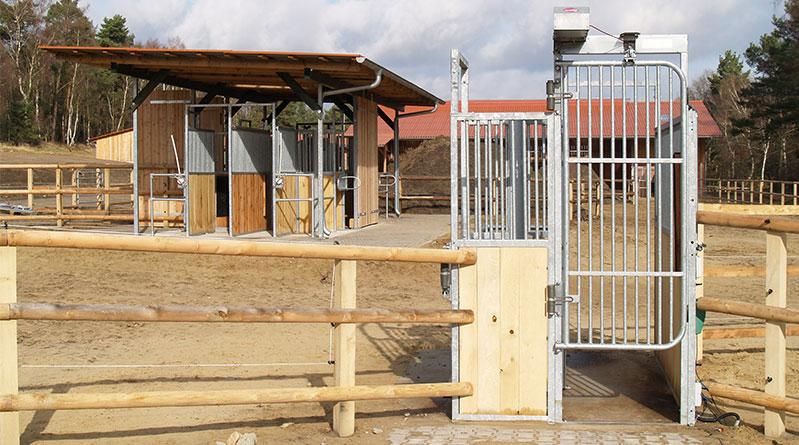 portillon-sortie Comment les chevaux apprennent l'écurie active