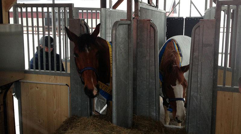 mettre-cheval-ecurie-active 10 Bonnes raisons de mettre mon cheval en pension en Écurie Active