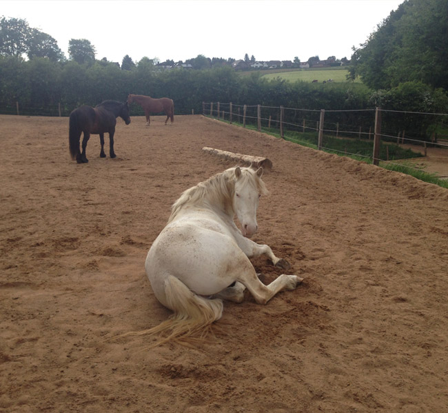 convaincre-proprietaires-ea-2021 Convaincre les propriétaires de mettre leur cheval en pension dans votre écurie active