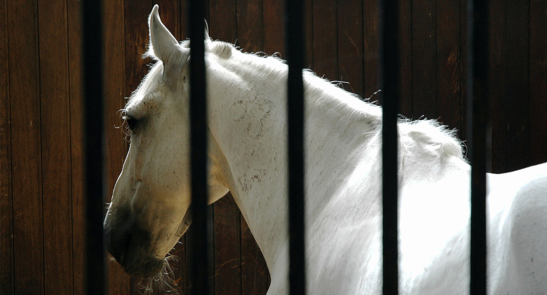 covid-ecurie-active Pourquoi COVID, confinement et couvre-feu nous amènent à remettre en cause le mode d'hébergement de nos chevaux