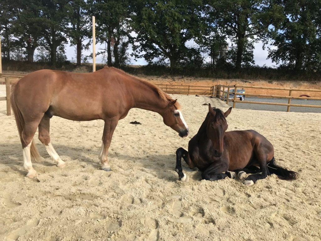 pexels-helena-lopes-1996331-1024x662 Les chevaux ont-ils besoin d'abri pour se coucher ?