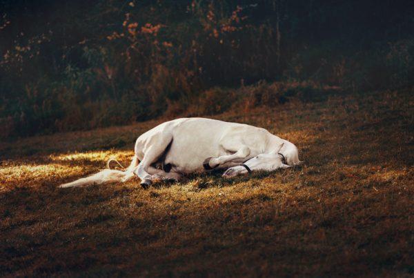 pexels-helena-lopes-1996331-600x403 Les chevaux ont-ils besoin d'abri pour se coucher ?